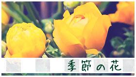 季節の花のギャラリー