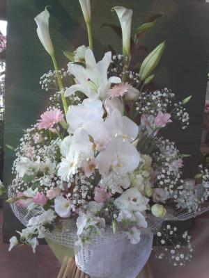4月26日 この花メール