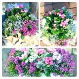 NEW♡spring gardening