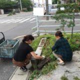 草ぬきDAY